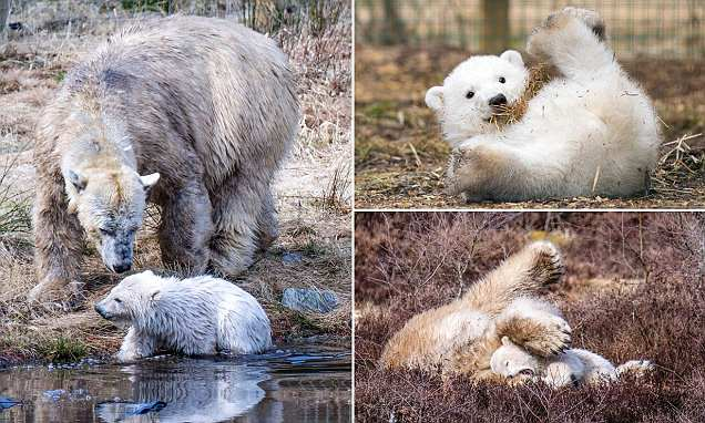Britain's first polar bear cub in 25 years is named Hamish after vote