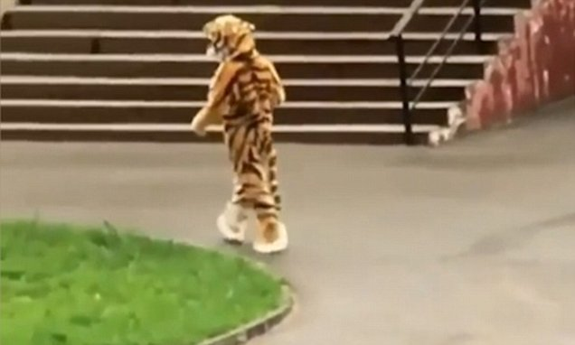 Russian zoo is mocked for making a keeper dress as a tiger