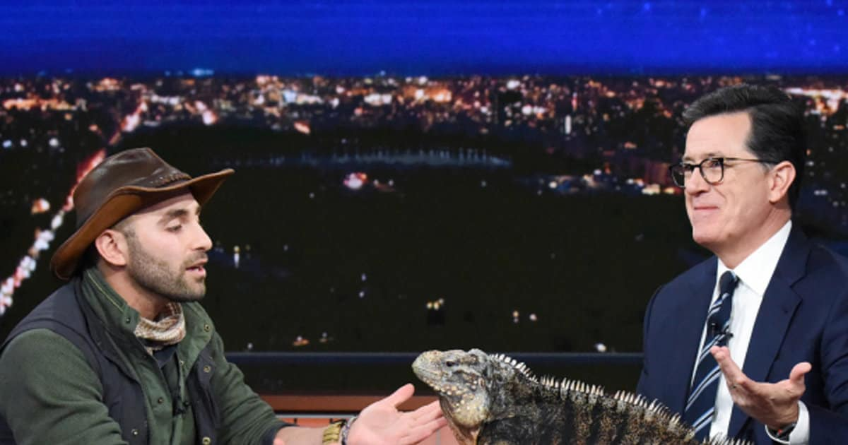 Stephen Colbert Is Not Thrilled When a Massive Iguana Pees All Over His 'Late Show' Desk