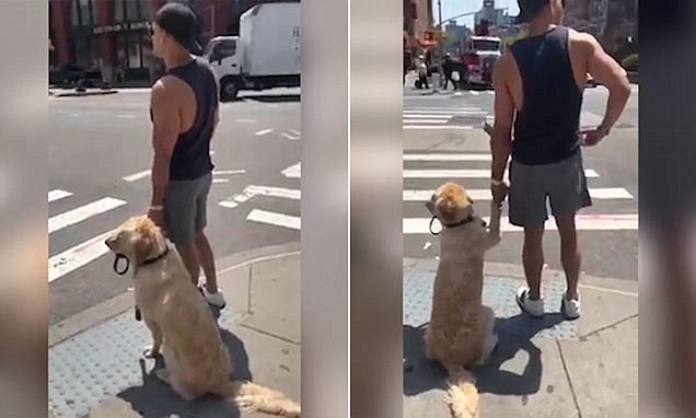 Adorable moment a pooch holds its owner's hand before crossing a road