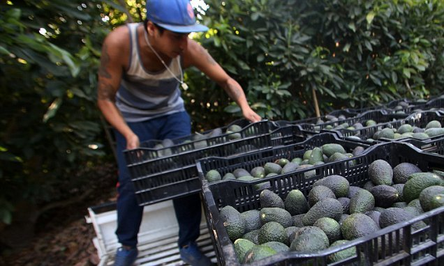 Demand for avocados led to drought in Chilean region which supplies UK