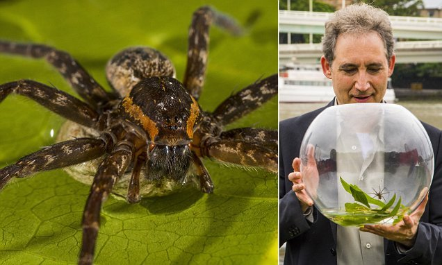 Australia is now home to 23 new species of water-bound spider
