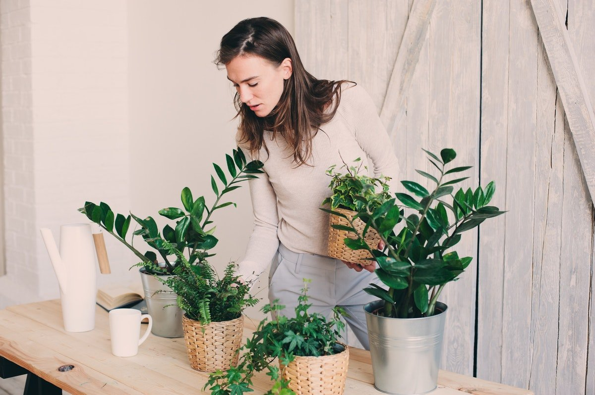 A Study Says Plants Can Tell Each Other To GTFO When They're Feeling Too Crowded