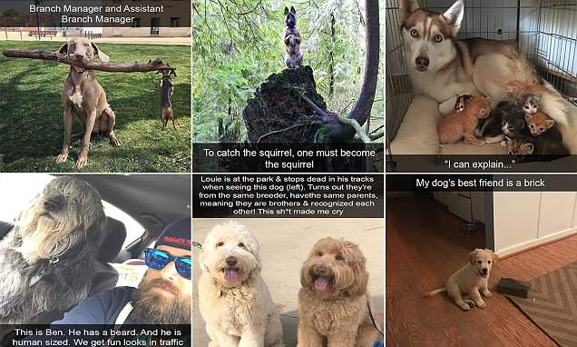 Pet owners share Snapchats of their pooches doing hilarious things