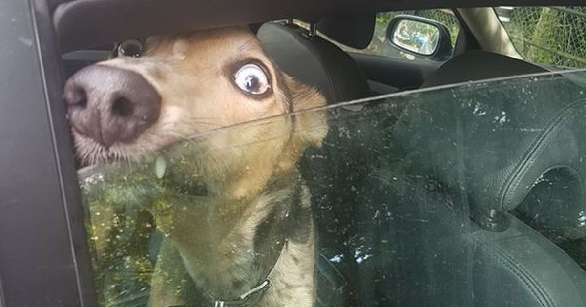 Dog 'howled and cried' for 20 minutes while locked in roasting vehicle