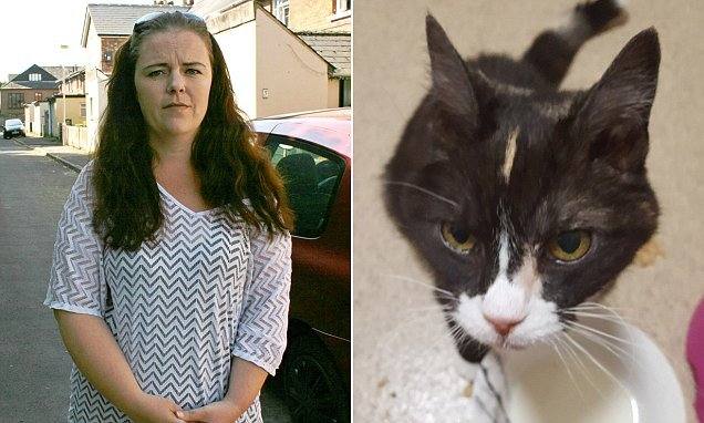 Tesco offers family £250 after 'smirking' delivery driver ran over cat