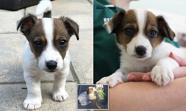 Heartless owners hand in puppy to police just hours after buying him