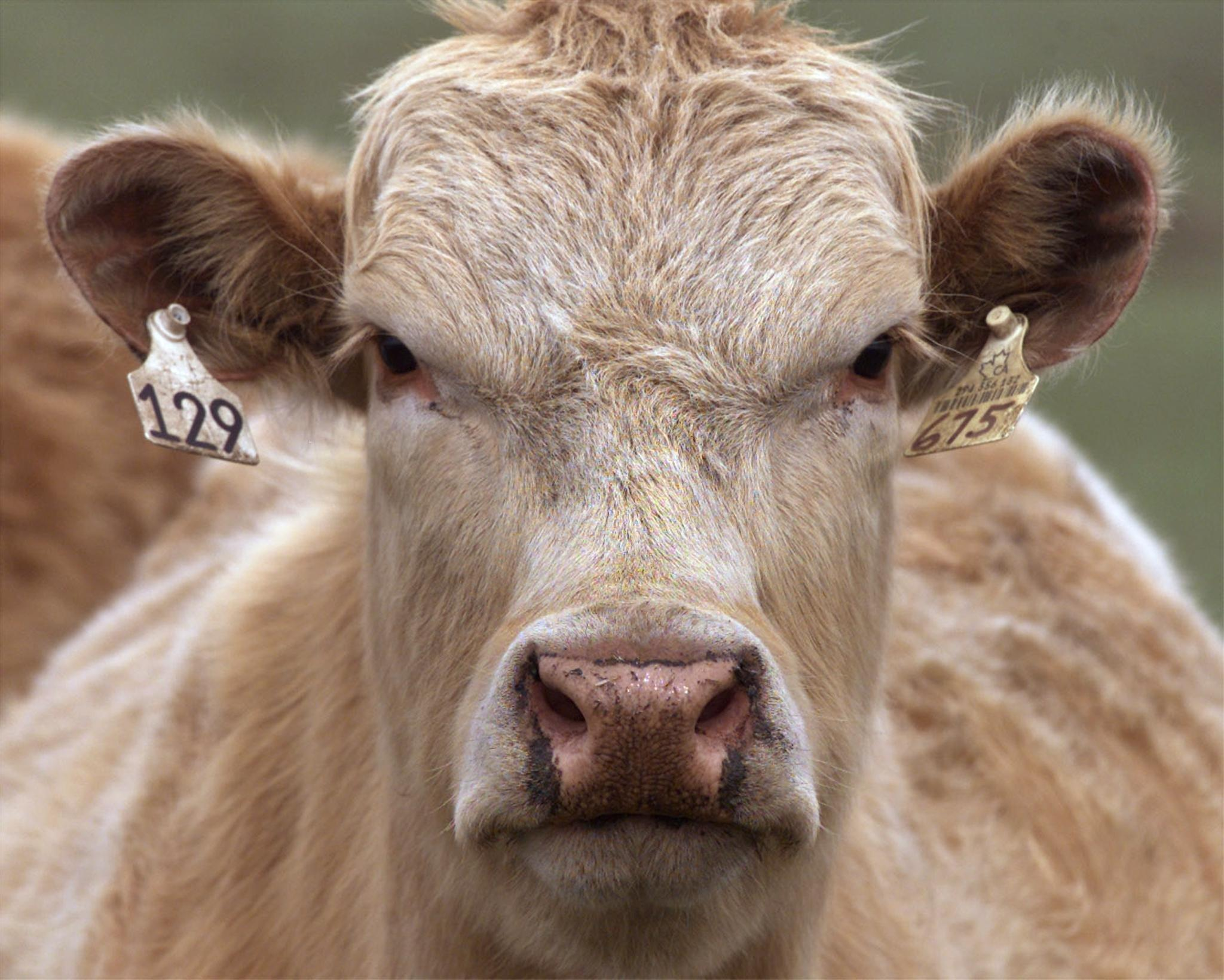 Mad cow disease found in Florida animal sparking fears of US outbreak