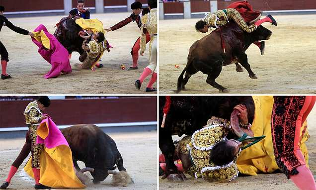 Fighter gored in first bull fight of opening day of Madrid festival