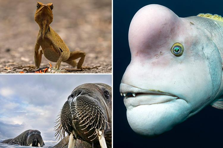 Amazing wildlife photos showcase variety in the animal kingdom — but one of them needs a mate