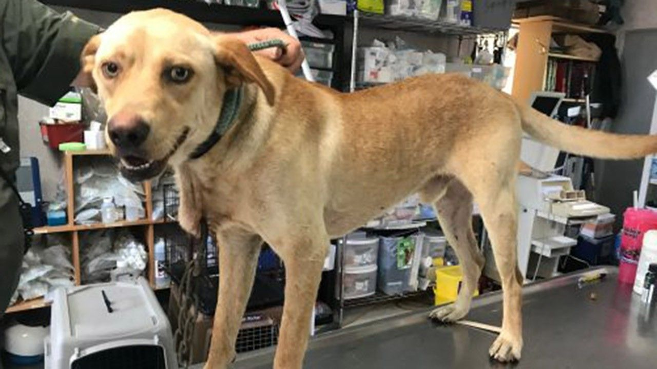 Florida dog found with carabiner through his neck; nearly $10G offered for help finding culprit