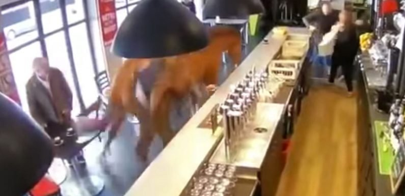 Horse charges into bar sending stunned customers running for cover