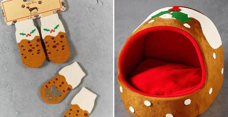 Matalan is selling Christmas pudding pet socks for just £3… and they're the perfect present for your pooch
