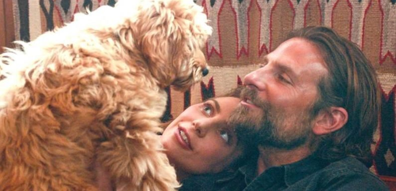Bradley Cooper Earns PETA's First 'Compassion in Film Award' for His Dog in 'A Star Is Born'