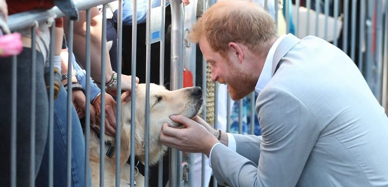 Prince Harry Bonding with a Dog in Sussex Is the Only Thing I'm Interested in This Morning