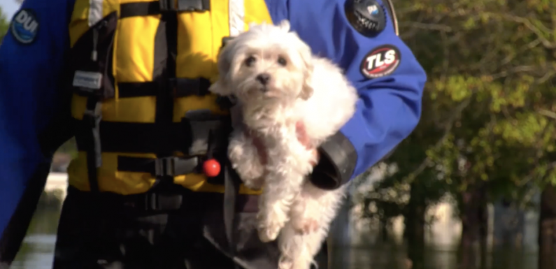Dog rescued after spending a week floating on couch in flooded home after Hurricane Florenc