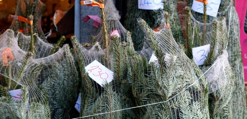 Homebase are selling 6ft high Christmas trees for just £12 after slashing prices to undercut Lidl