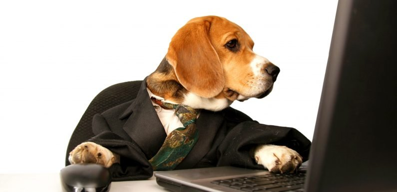 Who's the Boss? Survey Suggests Pet Ownership Is Linked to Professional Success