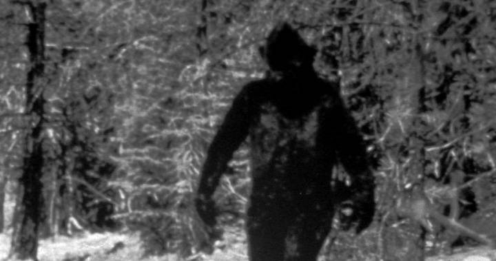 Nighttime podcast recap: Was it a Sasquatch in Pictou County, N.S.?