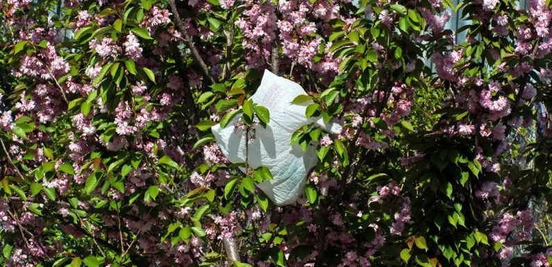 Plastic Bags, or Paper? Here's What to Consider When You Hit the Grocery Store