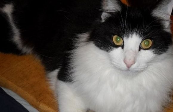 Missing cat reunited with owners six years after he vanished