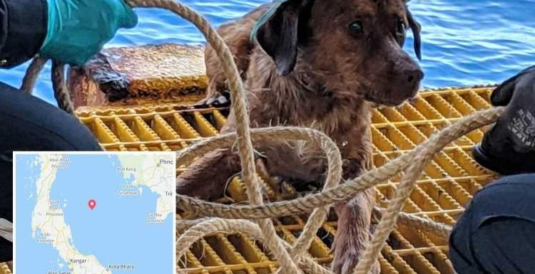 Heartwarming moment stranded dog is rescued after being found swimming 130 MILES off shore