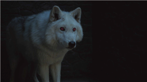 How Jon Snow's Direwolf Will Come Into Play On 'Game Of Thones' Season 8