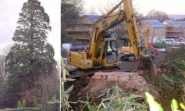 Builders face prosecution for 'mistakenly' chopping down redwood