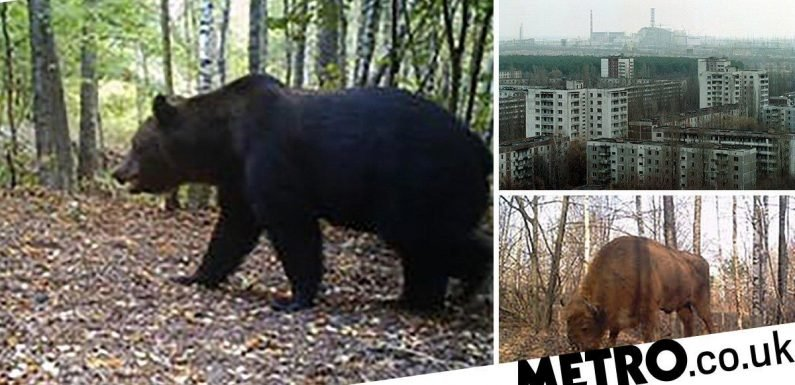 The Chernobyl nuclear wasteland has a thriving animal population