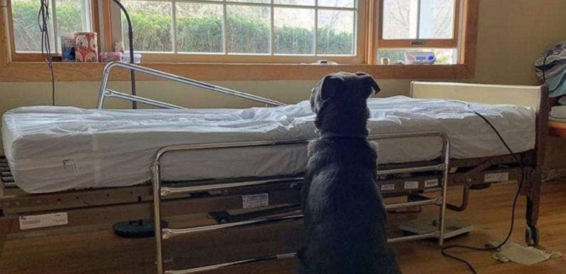 Heartbreaking photo of dog waiting for dead owner inspires adoption