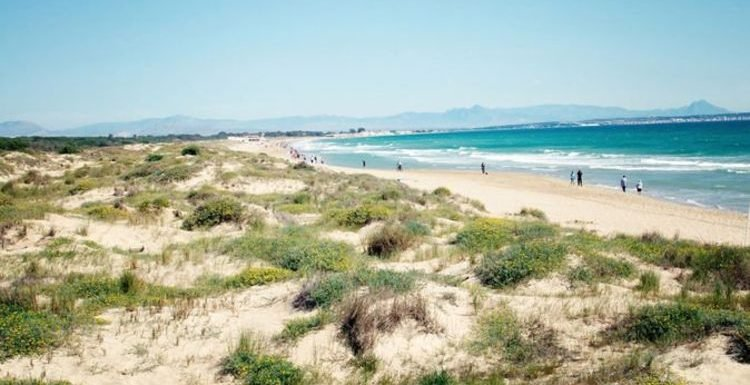 Three Spain beaches in Costa Blanca CLOSED after mystery fish bites two children