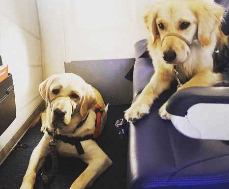 Therapy Dogs Rudy and Chanel Fly Out to El Paso to Comfort Victims and First Responders