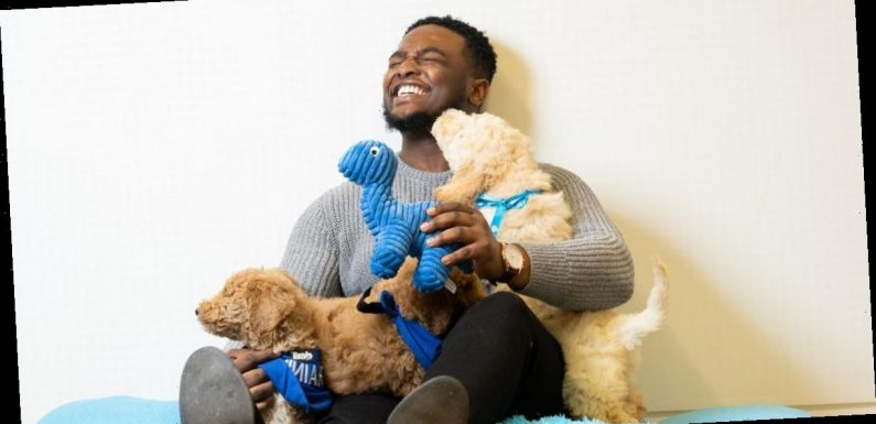 Stressed Brits can now go to free puppy cuddling sessions to help them stay calm