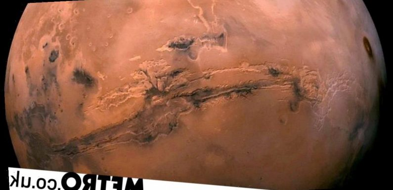 'There is life on Mars': Scientist claims Nasa photos show alien insects