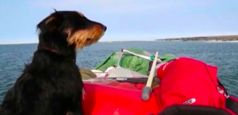 Russian space agency called in as man and beloved dog go missing in the Arctic