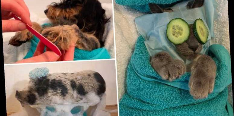Hilarious snaps show animal lover's pets being treated to extraordinary pamper session – The Sun