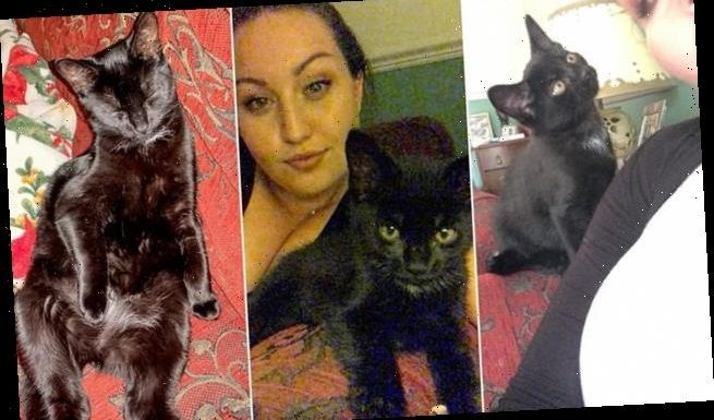 Cat owner finds her seven-month-old kitten Neo DECAPITATED