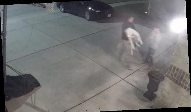 Stubborn dog throws himself down on his family's driveway