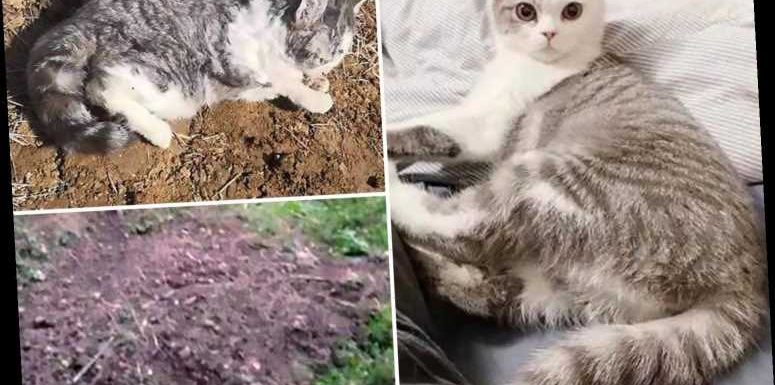 Coronavirus – Quarantined man's 'cat is BURIED ALIVE by panicked neighbours who feared it could spread bug'