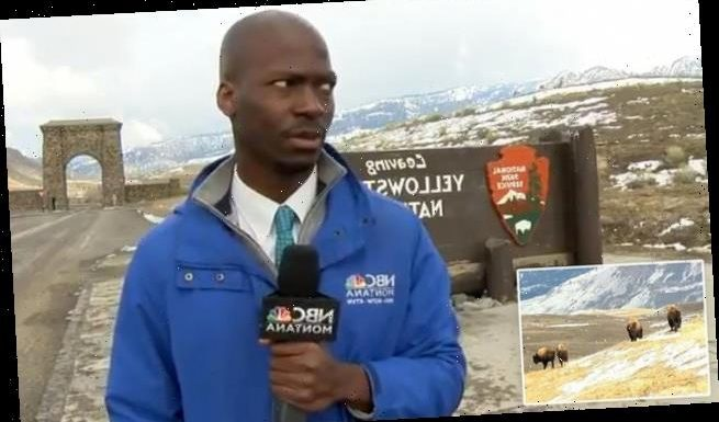 'I ain't messing with you!': Moment reporter sees bison at Yellowstone