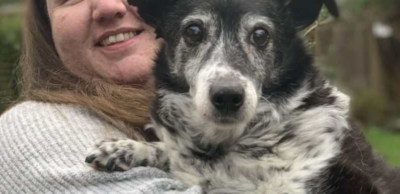 Britain's oldest dog is still going strong at 147 in human years