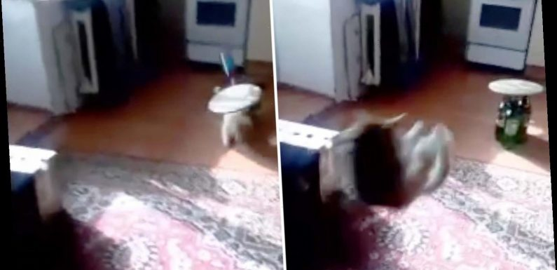 Sickening moment parents use pet cat as a BOWLING BALL despite pleas from daughter, 9, during coronavirus lockdown – The Sun