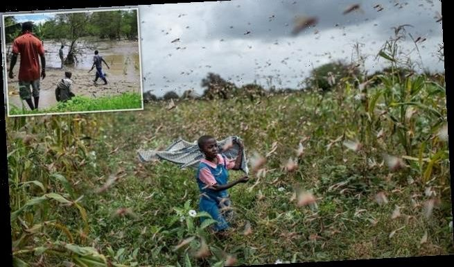 Locusts, Covid-19 and flooding pose 'triple threat' to East Africa