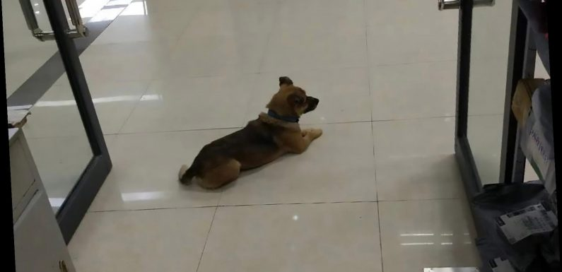 Loyal dog waits at Wuhan hospital for 3 months after owner's coronavirus death