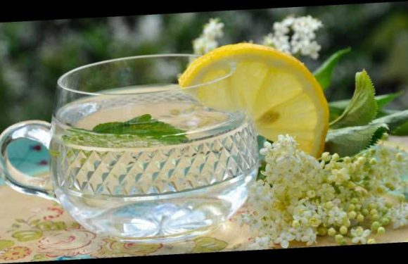 How to make your own elderflower cordial from scratch