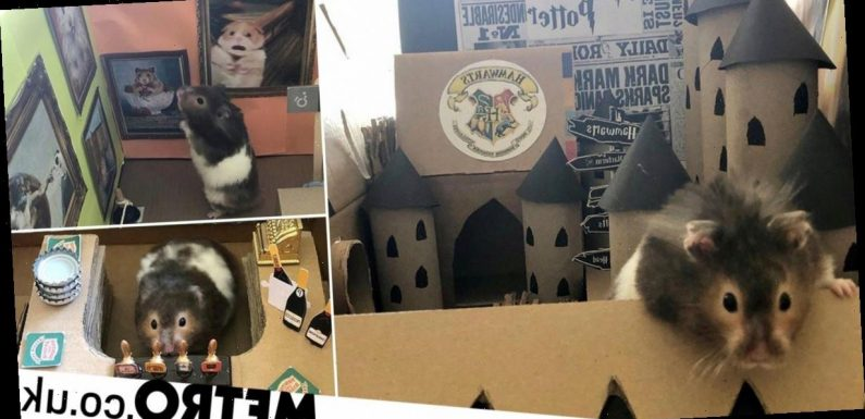 Hamster owner creates mini sets for him including Hogwarts and Coronation Street