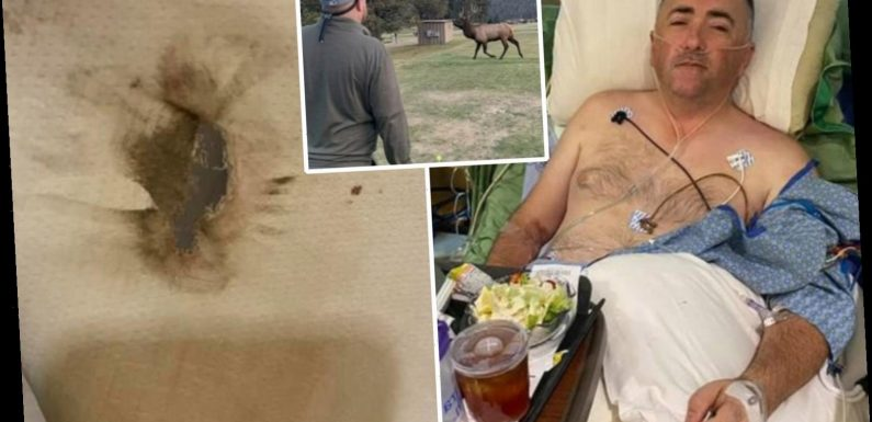 Colorado golfer, 41, viciously mauled by bull elk that ripped his kidney into three pieces