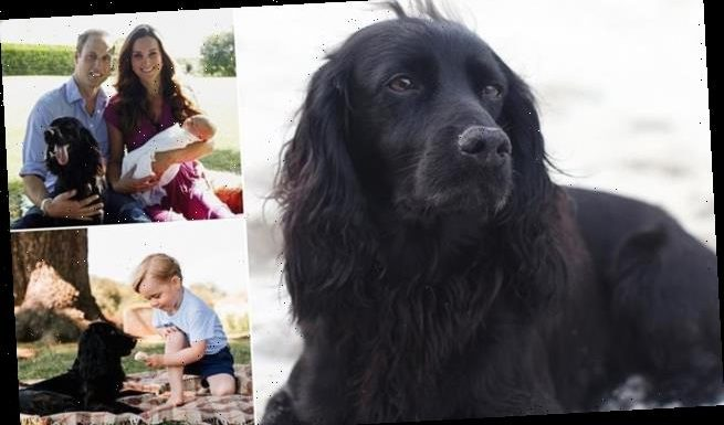 Prince William and Kate Middleton's 'dear dog', Lupo, dies