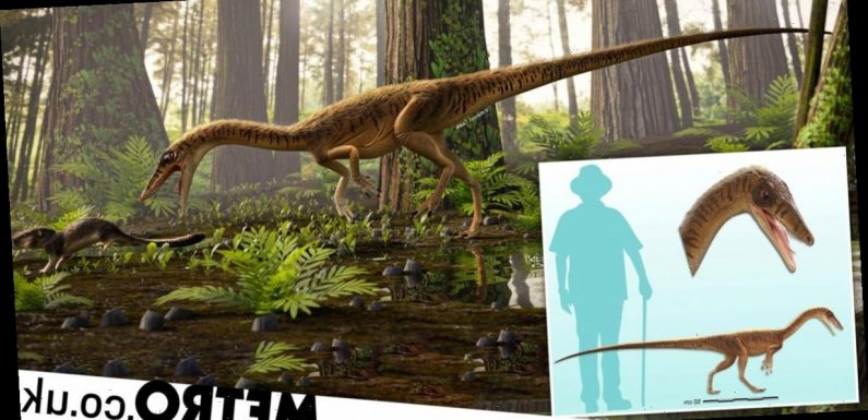 230 million-year-old dinosaur dubbed 'Godfather of T-Rex' unearthed in Brazil