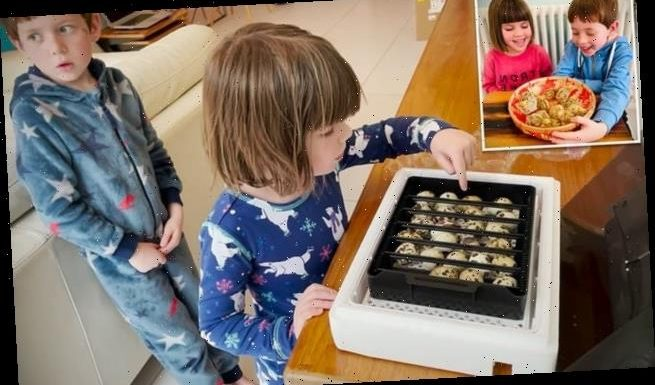 Children hatch 12 chicks from box of quail eggs bought at M&S
